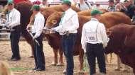Krajowa Wystawa Bydła Mięsnego