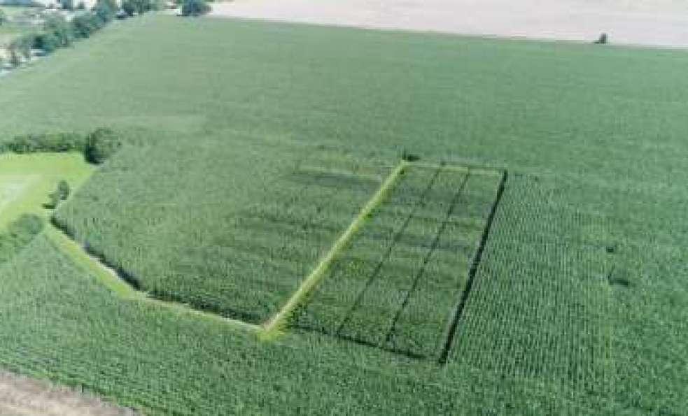 Uprawa kukurydzy - poletka doświadczalne